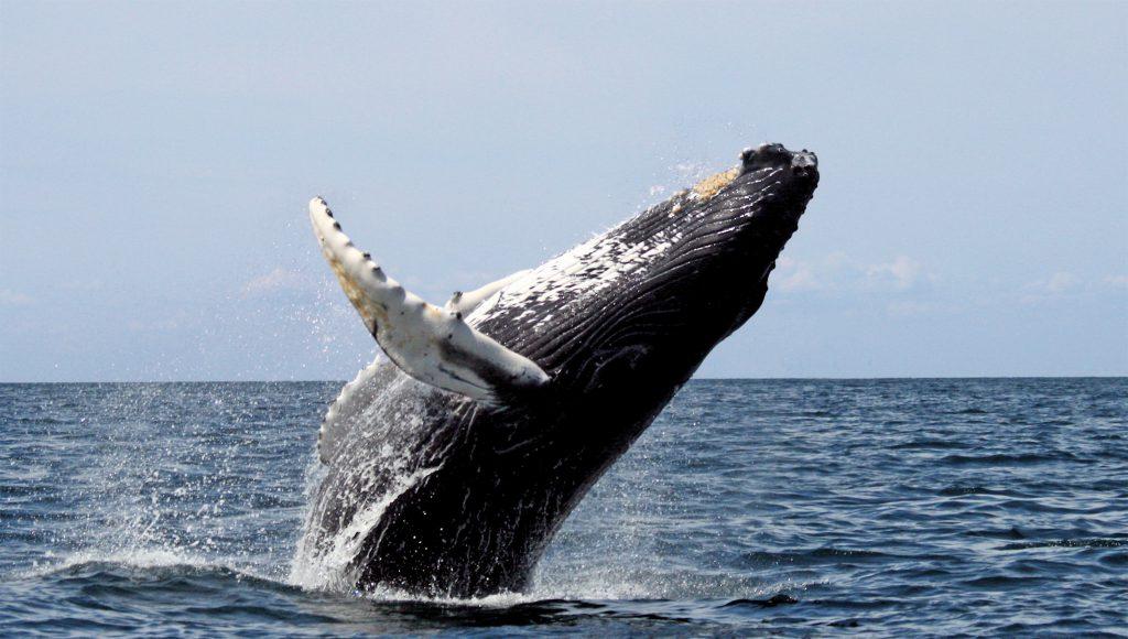 Whale Off the Oregon Coast